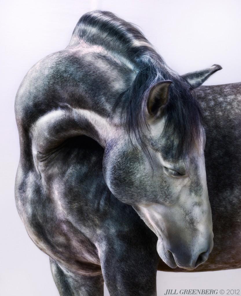 jill-greenberg, horses