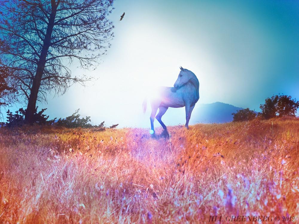 horses, jill-greenberg