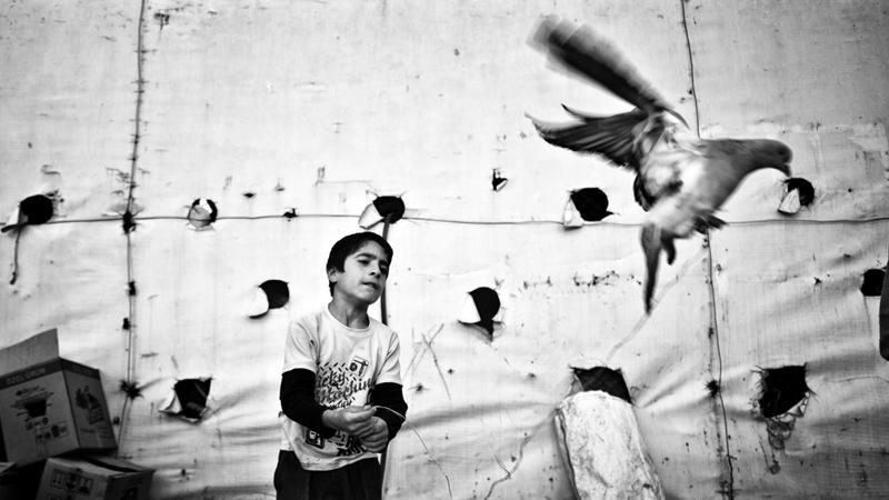 Birdy, Mustafa-Dedeoglu