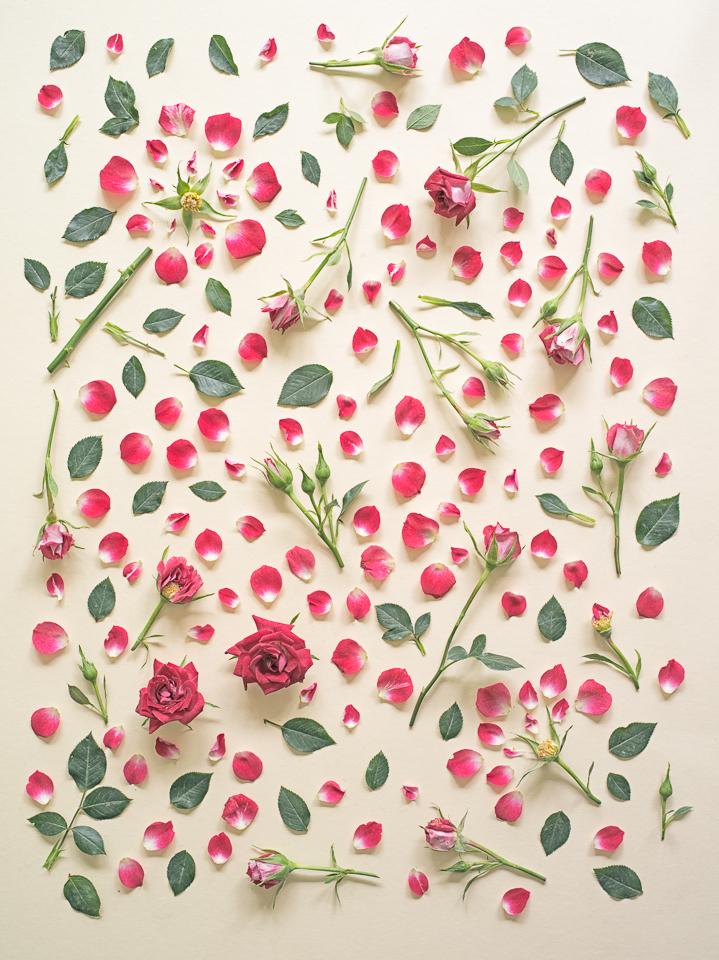 Roses, 2013