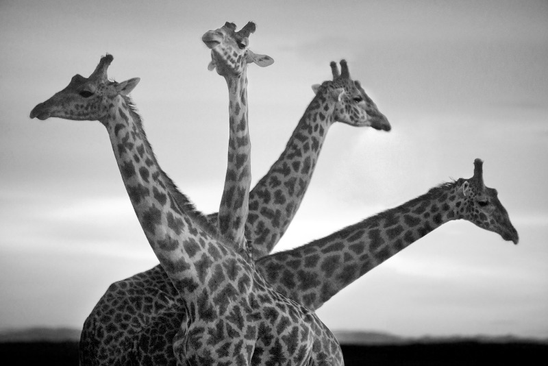 Nature, Photography, Art, Africa, Conservation, David-Gulden, The-Center-Cannot-Hold