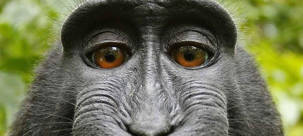monkey_selfie_feature_itsw2