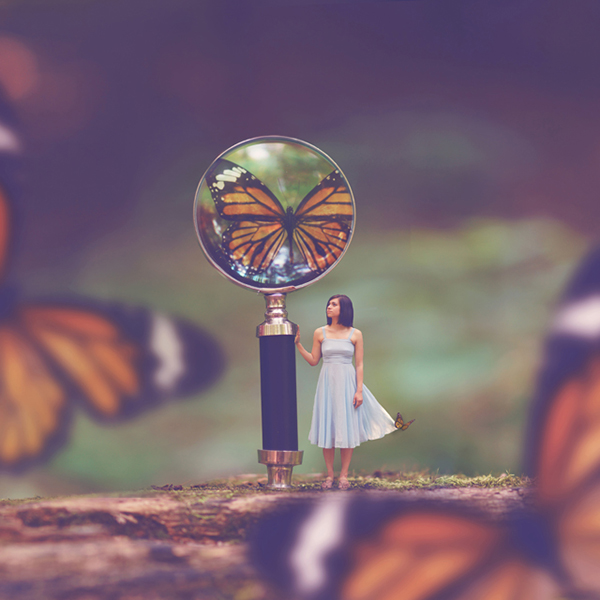 joel-robison, wild-ones-tour, photography, education, emerging, vanguard, why-tripod, butterflies