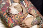 Tattoos and Rescues: Teaching Old Dogs, And Stereotypes, New Tricks
