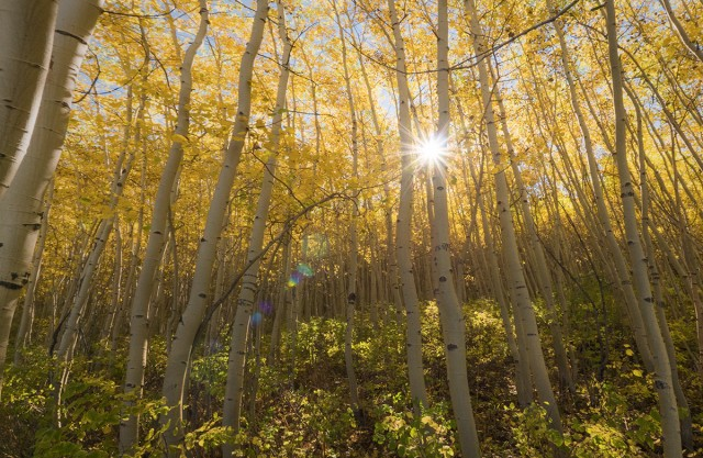 fall-aspens-edit3