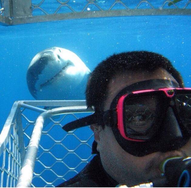 sharkselfie