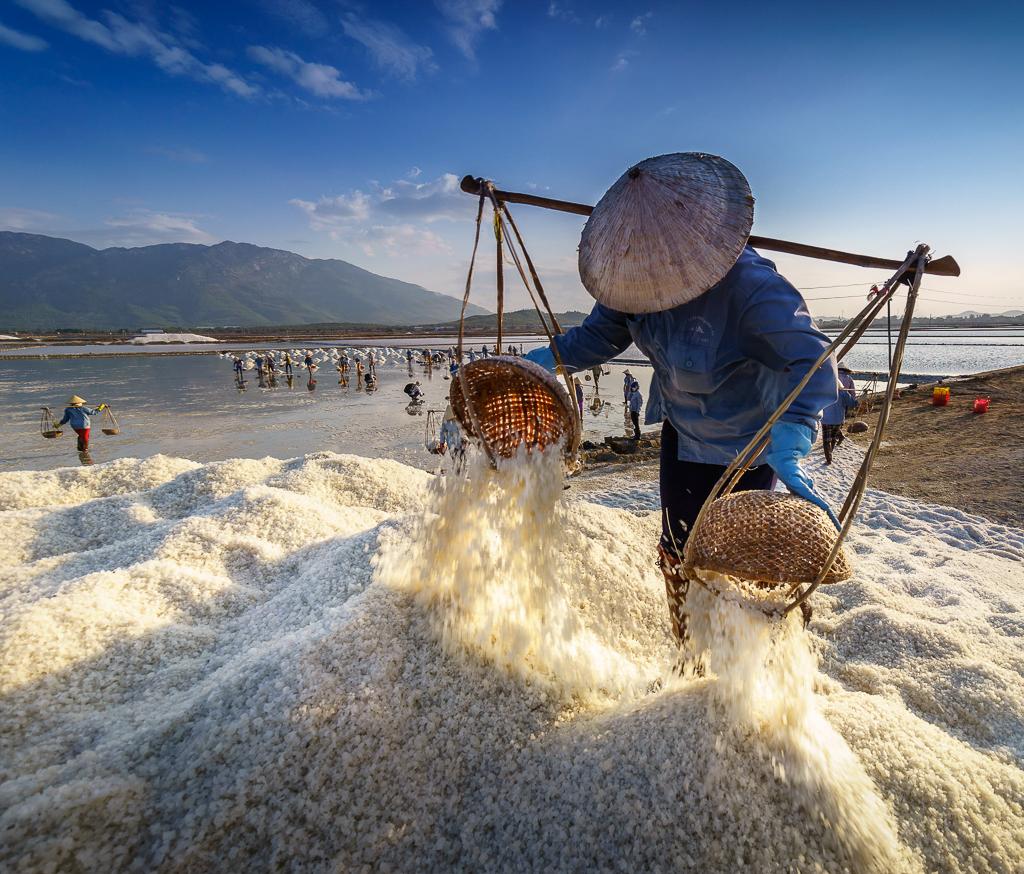 16. salt harvest