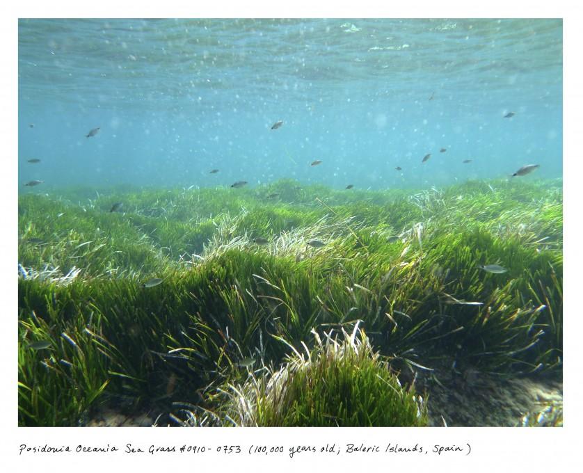 08_Sussman_seagrass_0910_0753