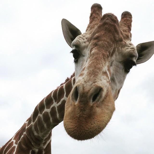 © African Safari Wild Life Park