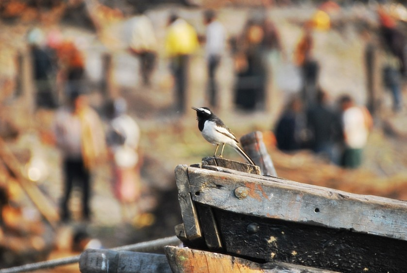 Birds of various species awaits the dead bodies that floats on the Ganges © Nomadic Experiences