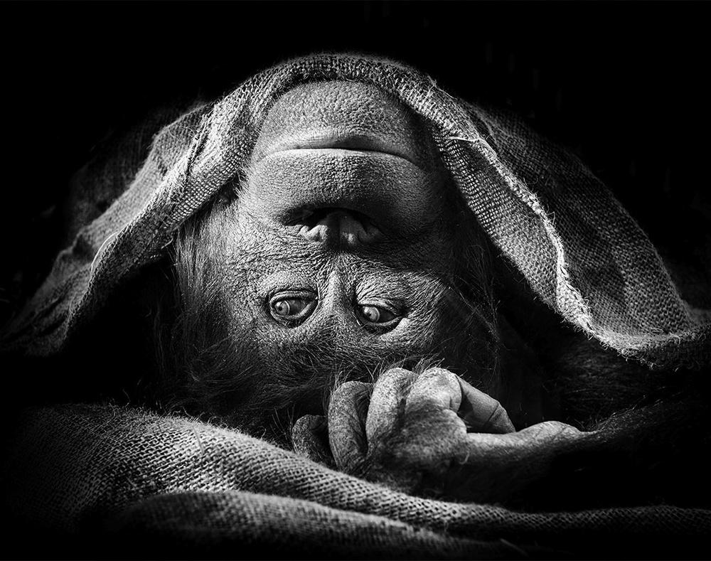 © Pawel Bogumil