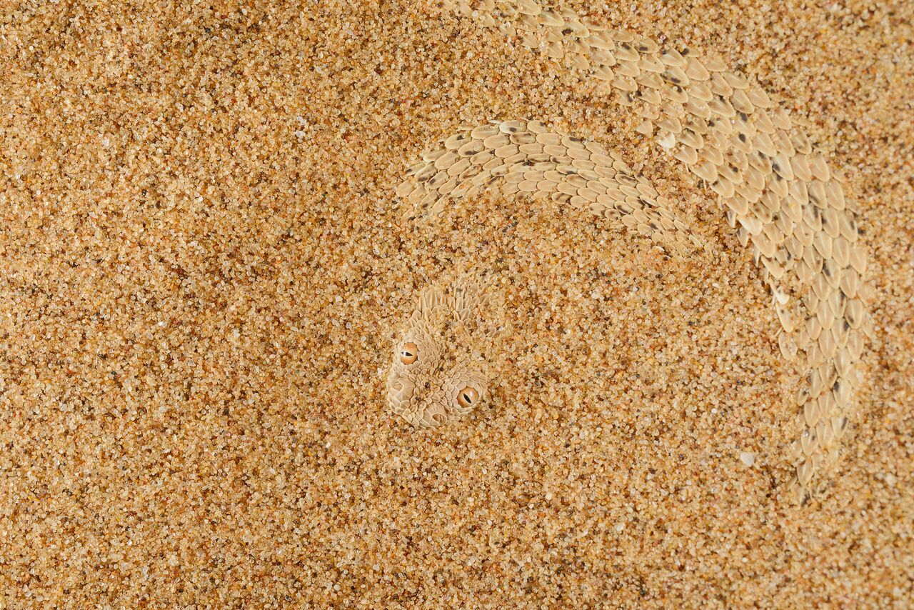 sand-has-scales_22977746571_o