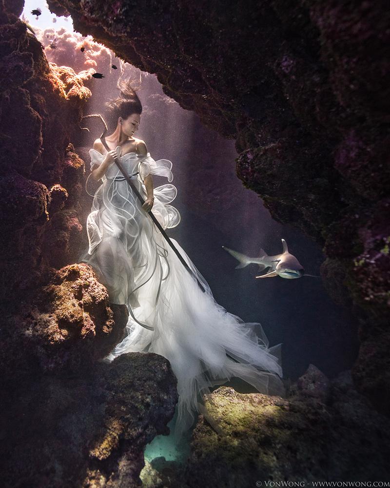 resource-SharkShepherd_VonWong_4-web