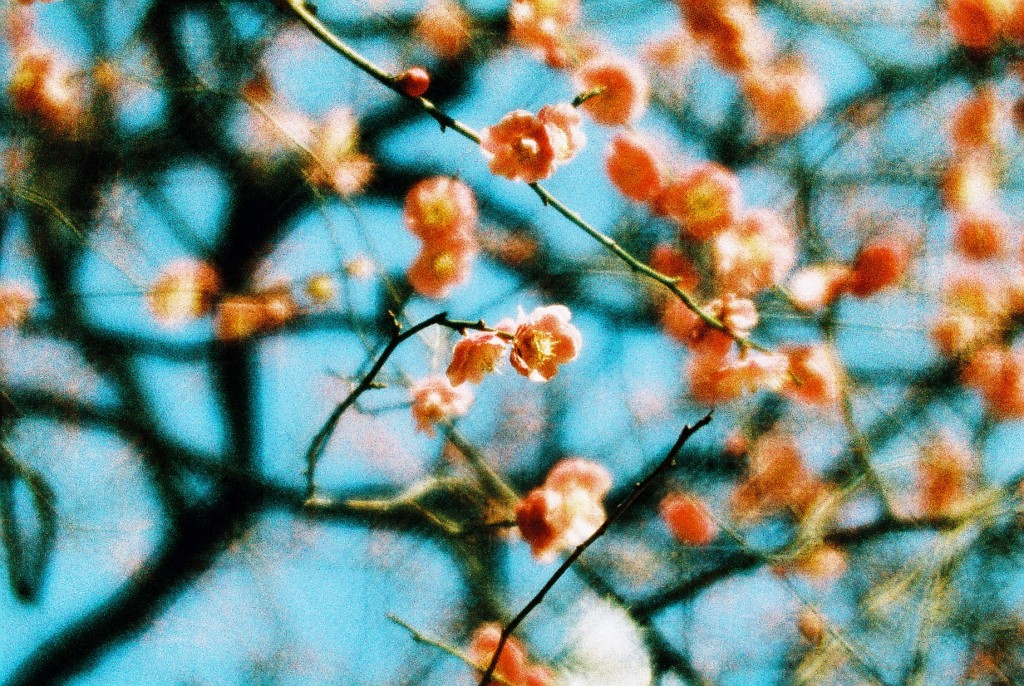 Lomography Daguerreotype Achromat Art Lens, (c) Kieko Hoshi, Japan (analogue)