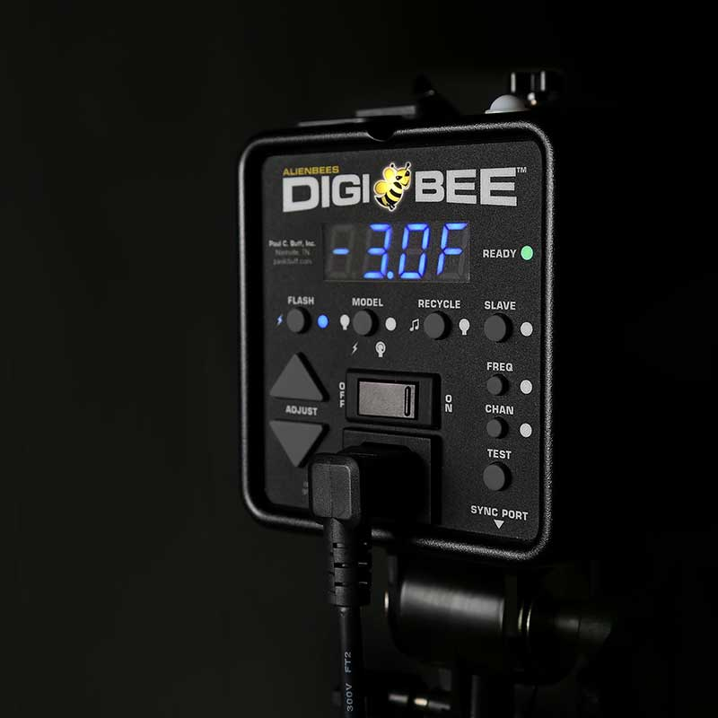 DigiBees Review