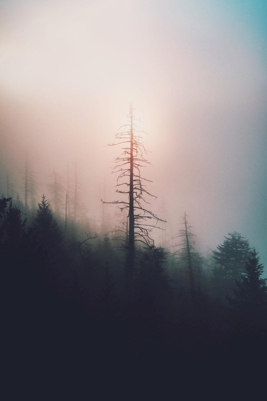 instagram-editing-photography