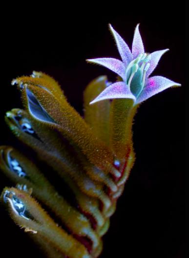 ultraviolet, flower, light