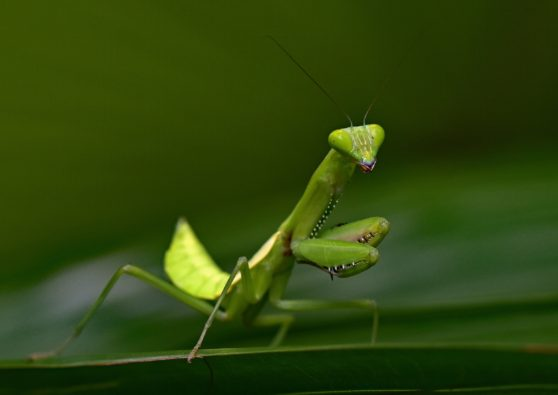 grasshopper, leaf, insect
