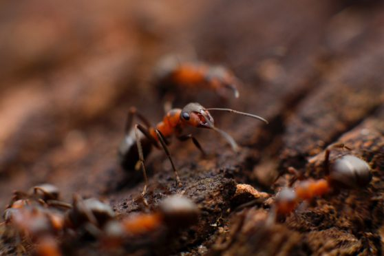 ants, soil, walking