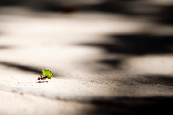 ant, bug, leaf, road