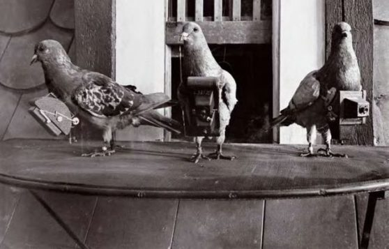 Pigeons Were The Original Drone Photographers